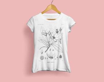 Gordonia Lasianthus Ladies T-Shirt - Botanical Illustration, Botanical Art, Botany Art, Flower Tshirt, Vintage Style Art Print, S M L XL XXL