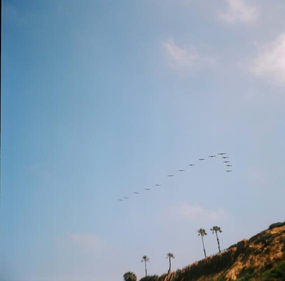 birds over swami