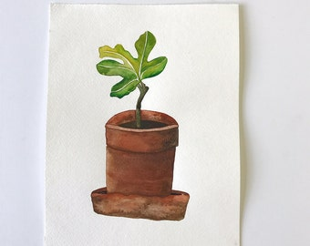 Baby Fig Tree