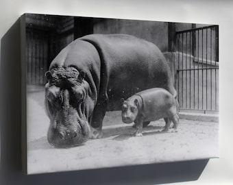 Canvas 16x24; Hippopotamus At The National Zoo, Washington, D.C. 3C20511U Original