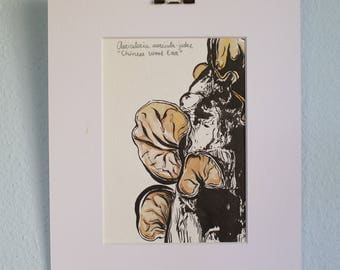 Chinese Wood Ear Mushroom original watercolor ink painting matted