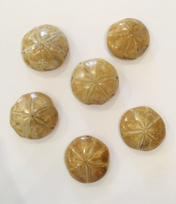 Beautiful SEA URCHIN FOSSILS/ Sea Urchin// Small Fossils/ Fossil// Healing Crystals/ Healing Tools// Authentic Fossil/ Fossilized Sea Urchin