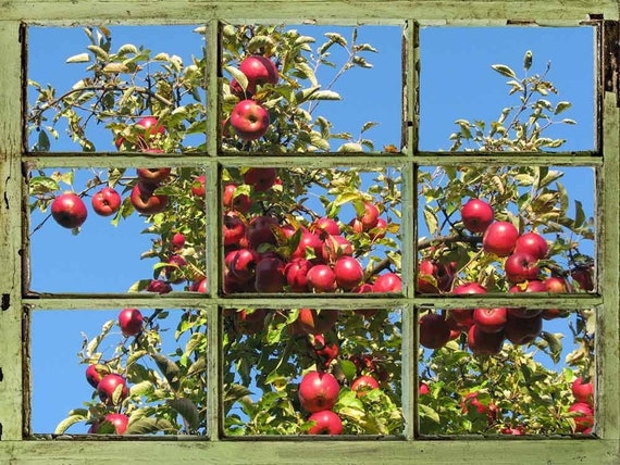 Window view wall mural apple tree against clear blue sky for Apple tree mural