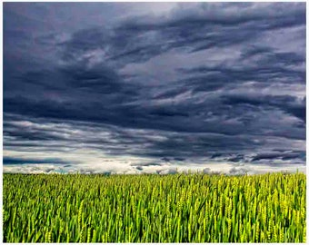 Wheat field print, Kansas decor, storm clouds, great plains art, rustic decor, wheat photograph, wheat wall art, nature wall art