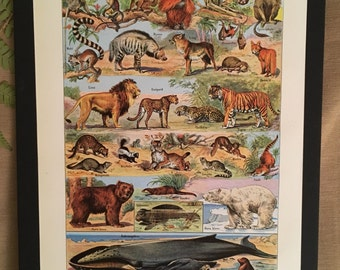 Board naturalist, history & natural science - mammals 2 - Larousse