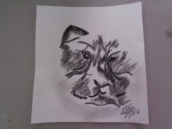 """art/drawing/charcoal/kitty- """"Hint of a Cat"""""""