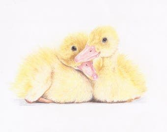 Duckling Fine Art Animal Giclee Print
