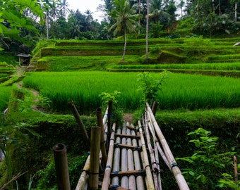 Landscape Photography, Ubud Bali Rice Terraces, Green Nature