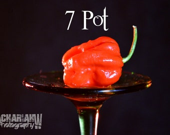 7 Pot Super Hot Pepper (15+ Seeds)