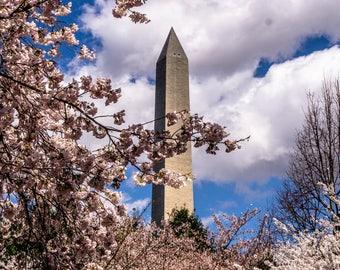 Artomatic - Cherry Blossoms - Washington, DC - spring - Washington Monument - nature - portrait