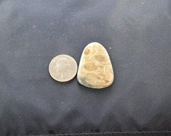 Petoskey Stone free form cabochon