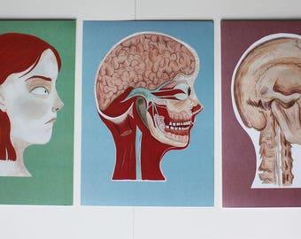 Set of 3 Anatomical Illustration Prints