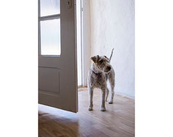 Terrier Dog Photography, Fine Art Photography, Archival Giclee Print, Wall Art, Minimalist Art, Welcome Home Sweet Home Decor