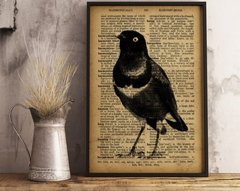 Bird Dictionary print, Vintage style dictionary print, Bird antique decoration, Bird illustration wall art, Bird mixed media print A226
