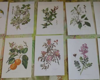 10 old engravings boards 1960 apricot tree, Euphorbia, cherry, medlar, Meriser, wall decoration, framing, interior decoration flowers