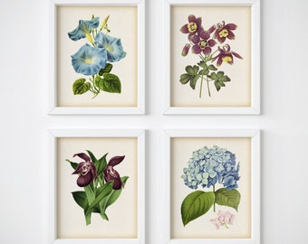 Digital download vintage flower print set of 4, Orchid print, Hydrangea print, Morning glory print, Columbine print, Home wall art, JPG