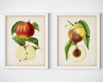 Fruit print set, Apple print, Peach print, Kitchen printable wall art, Digital download prints, Fruit art, Botanical illustration, Print art