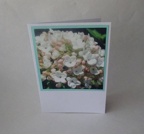 Mother's Day Card with Summer Snowflake Viburnum Flowers - #1436