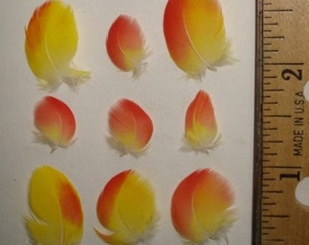 50 Tiny Natural RED & YELLOW Parrot Feathers under 2 inches + 3 FREE in every set! Choose Your Sizes!