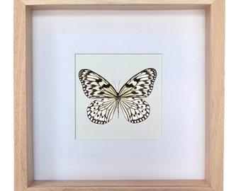 Beautiful butterfly in frame--Papilio Idea leuconoe obscura-- vlinder in lijst