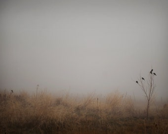 Birds in Fog Photograph,  Nature Photography,  Prints and Canvas available, Home Decor, Art, Large Art,