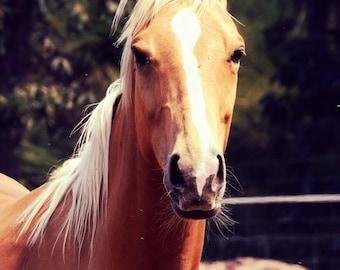 Horse Wall Decor- Photography - Canvas Print