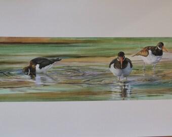 A4 Oystercatcher Print