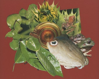 Cuttlefish, Frogs and Leaf Bug