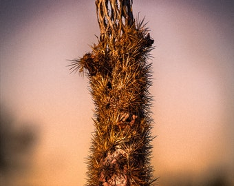 Prickly Skeleton Cholla Cactus Southwest Color Black and White