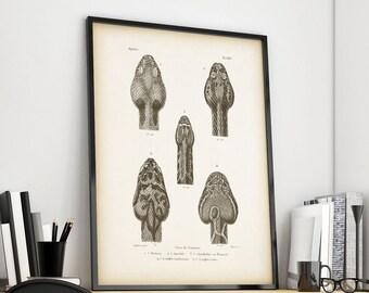Snake print vintage, Antique animal print, Download prints, Printable prints, Illustration download, Vintage, 8x10 print, 11x14 print, JPG