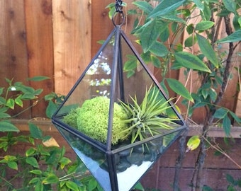 Hanging Glass Prism Air Plant Terrarium Planter with Green Moss, Black Stones & White Sand Kit