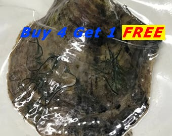 Akoya Oyster Individually Wrapped With 6-7mm Pearl BEST Quality and Price Discount - Order To Go