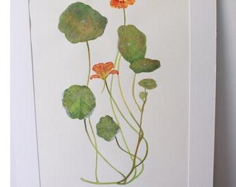 Original Botanical Watercolour painting
