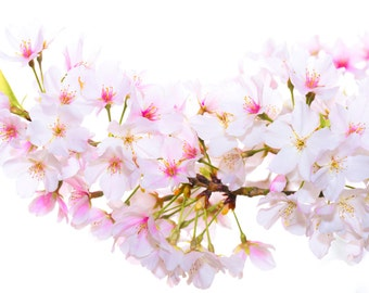"Cherry Blossom Print, Cherry Blossom Abstract Print, Pink Flower, Abstract Flower Print, ""Cherry Blossom Flower Abstract"" Photograph Print"