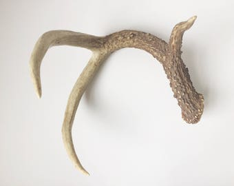 one authentic deer antler tabletop decoration
