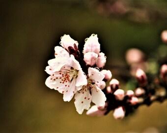 Japanese Garden Flowers Photograph