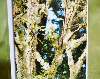 Original, greetings card, photograph, outdoors, nature, trees Size A6