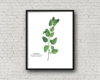 Oregano Watercolor Painting, Kitchen Wall Art, Fine Art Print, Wall Art, Home Decor, Herb Painting, Food Art, Botanical Art, Gardener Gift