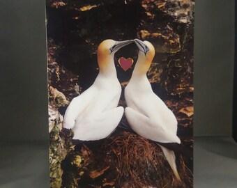 The Love Birds Card, anniversary card, card for him, card for her, blank card