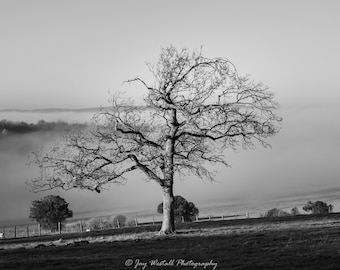 One Tree.....Black and white A4 print, mounted. The mist was rolling in as I shot this single tree on a hilltop near Goodwood racecourse.