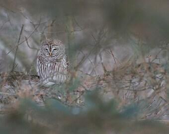 OWL Camouflage - Quebec City