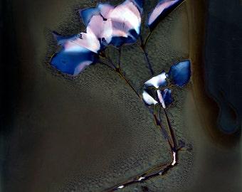 Leaves photography - Leaves of poplar - Contemporary photography - Fine Art Photography - Leaves illustration - Lumen print
