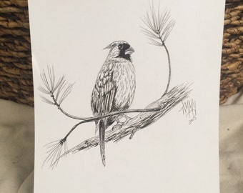 Pen and Ink Bird Drawing