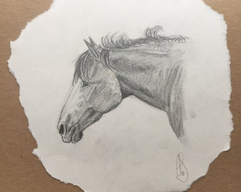 Mustang Paint Horse Drawing in Graphite