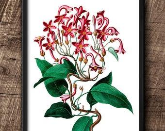 Flower · 8x10 · Instant Download · Botanical · Wall · Printable · Digital File #16