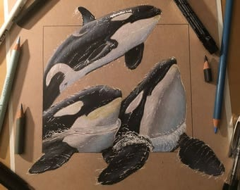 Pod Of Orca Digital Art by Walter Colvin |Pod Of Orcas Drawing