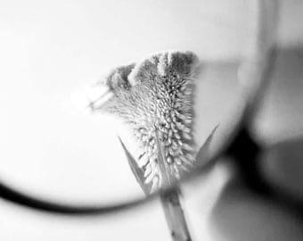 magnify flower. #1