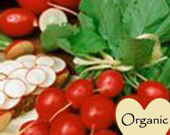 Radish Cherry Belle Organic Non-GMO, 100+ Organic seeds, Radishes Cherry, Organic garden Seeds, Vegetable Seeds, Organic gardening seeds