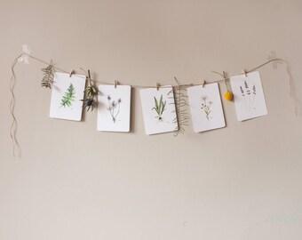 Set postcards, Watercoloring, 5 pieces, botanical, nature, Decoration