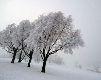 Print - Fog 'N' Frost